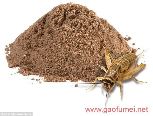 阿伯泰大学在校生研发出蟋蟀饼干英国数家公司已上架销售