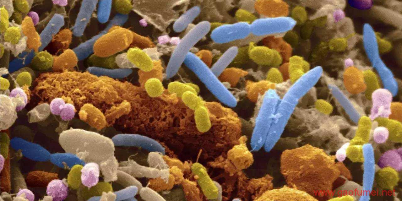 中外共同发起微生物组测序合作计划5年内完成万种微生物模式菌株基因测序