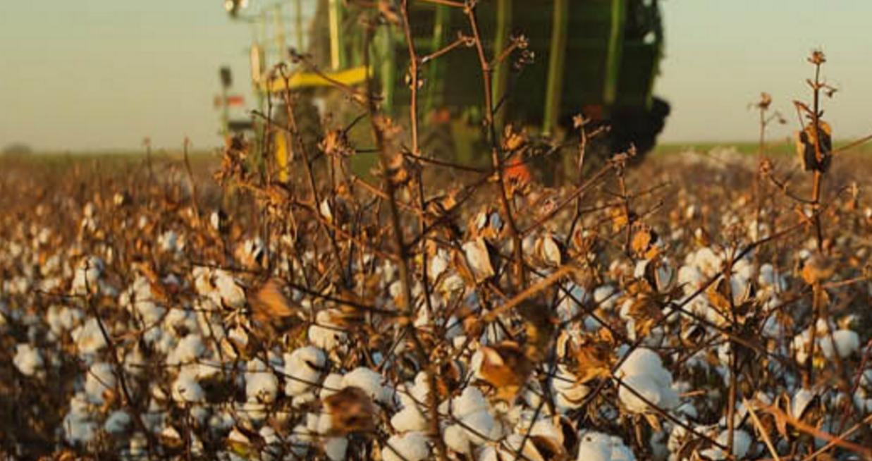 农业独角兽获1.56亿美元融资微生物打造的超级作物