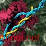 MIT研发纳米颗粒编辑基因可删除肝脏致病基因