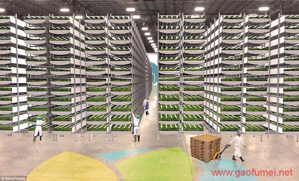 垂直农场AeroFarms获百万美元科研基金室内种植应对粮食危机