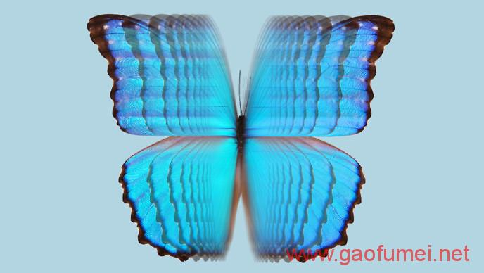 Vollebak推出反光滑雪夹克设计灵感来自蝴蝶