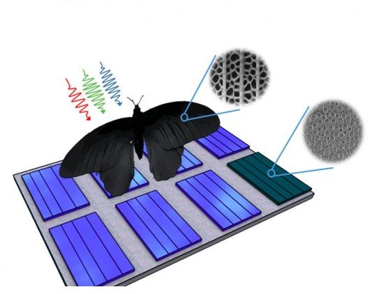加州理工学院研究出新型太阳能电池板灵感来自于红珠凤蝶