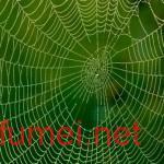 新型复合材料蜘蛛丝性能远超天然蜘蛛丝